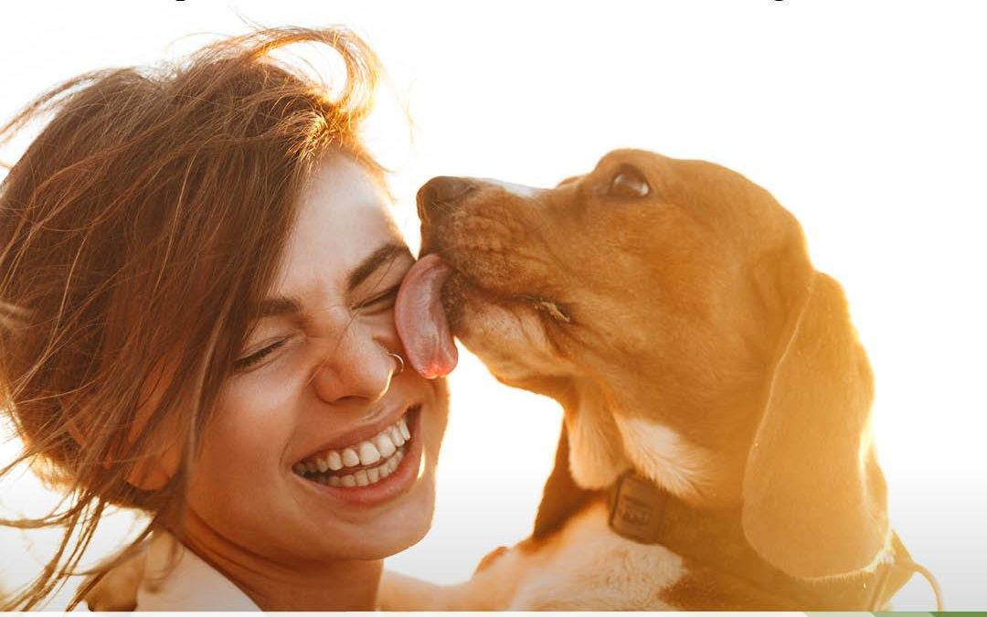 Buy CBD Products for Pets