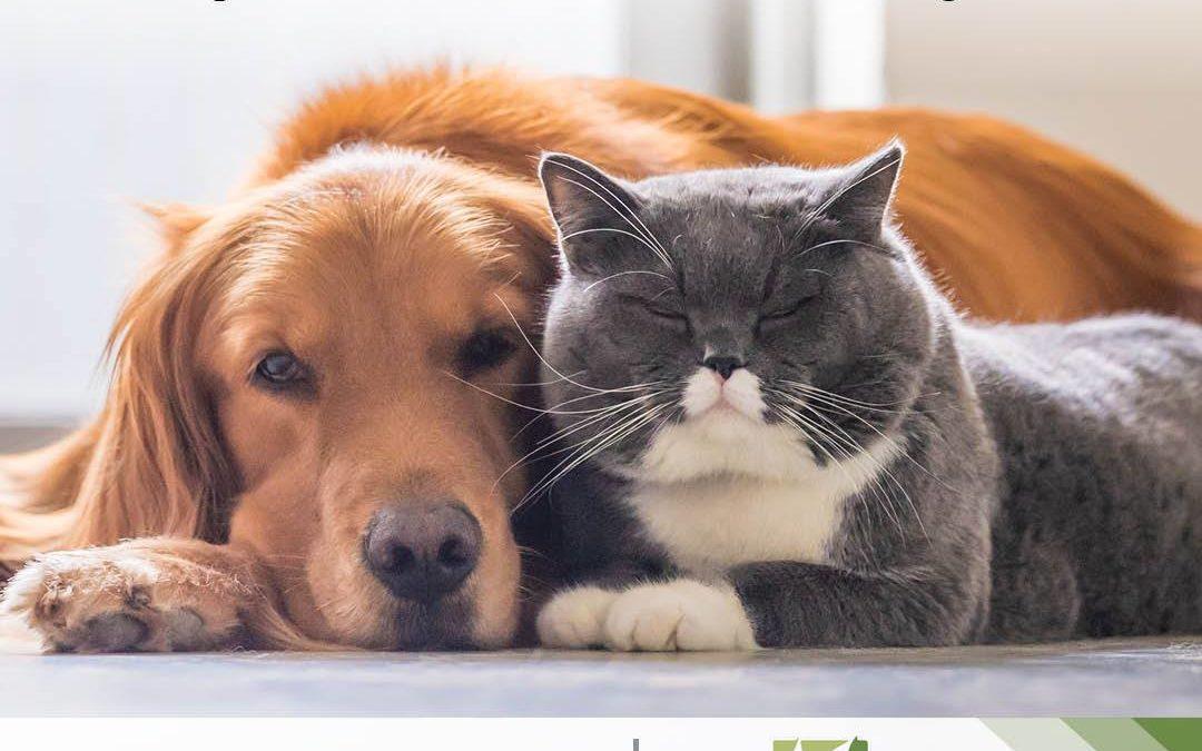 CBD has benefits for pets